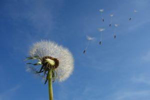 Ervas medicinais que estimulam a saúde e imunidade de toda a família - parte 2